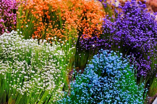 Bouchent fond de petite fleur colorée de l'herbe, petites fleurs blanches sauvages et fleurs violettes