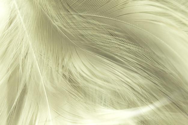 Bouchent fond de texture de plume