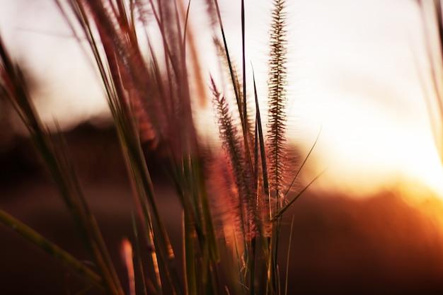 Bouchent l'herbe des fleurs colorées et fond de coucher de soleil