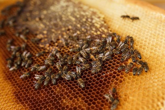 Bouchent nid d'abeille dans un cadre en bois avec des abeilles.