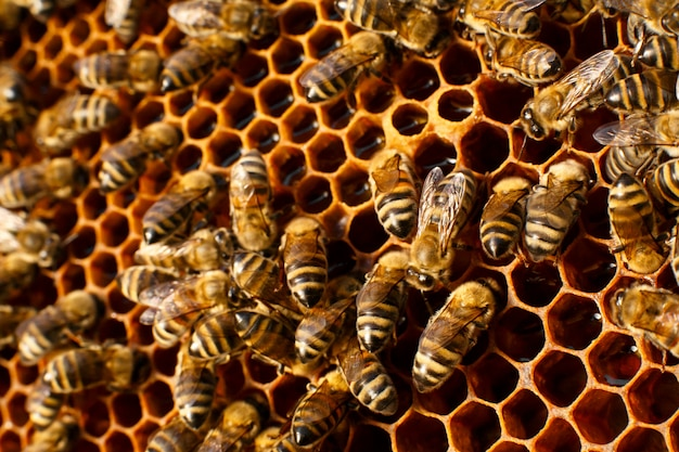 Bouchent nid d'abeille dans la ruche en bois avec des abeilles sur elle
