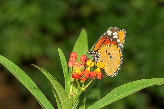 Bouchent papillon dans la nature au parc