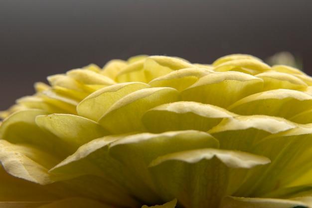 Bouchent les pétales et le pollen de belle fleur jaune.