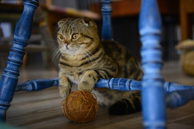 Bouchent le petit chat sur le sol dans un café animalier.