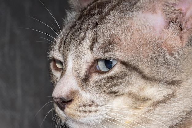 Bouchent les photos de chat