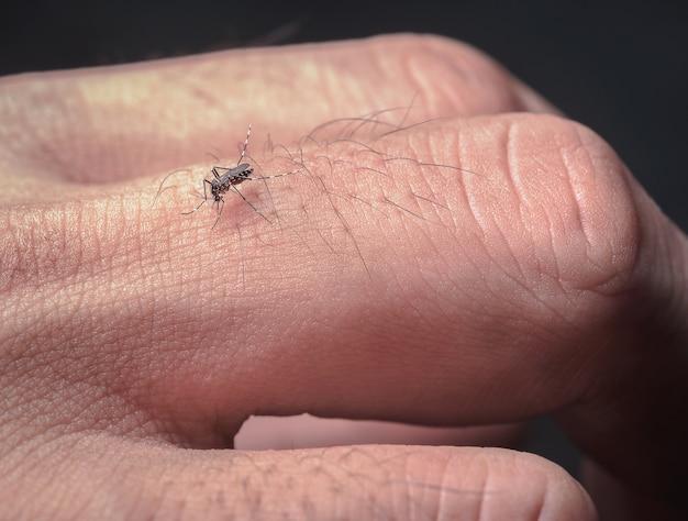 Bouchent les piqûres de moustiques qui mangent le sang les doigts de l'homme provoquent la propagation de la maladie.