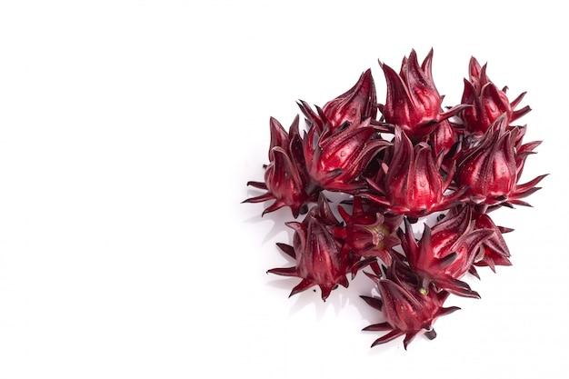 Bouchent roselle rouge coup de studio isolé sur blanc