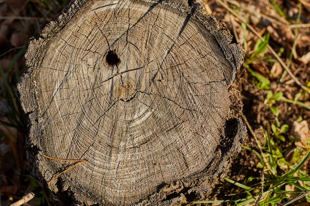 Bouchent la texture du bois ancien pour le fond.