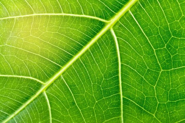 Bouchent la texture de la feuille verte,