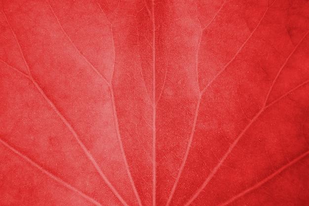 Bouchent la texture des feuilles de lotus rouge