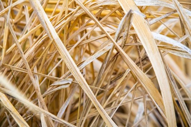 Bouchent la texture de fond d'herbe sèche. foin paille fond jaune
