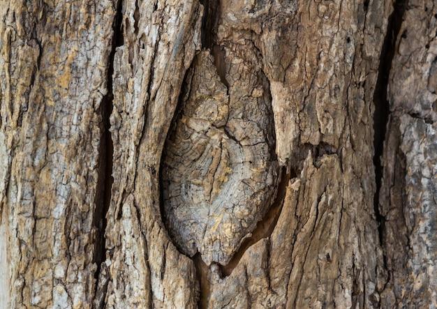 Bouchent la texture de la vue du tronc