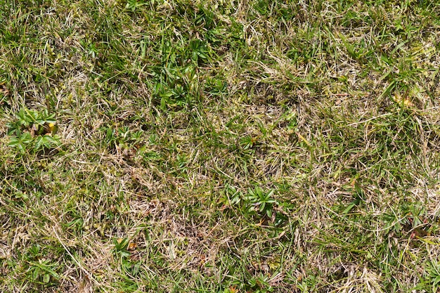 Bouchent la vue de dessus image abstraite du champ d'herbe sauvage jaune sec altéré avec quelques lames vertes le printemps ensoleillé ou la journée d'été. beauté du concept de l'environnement naturel.