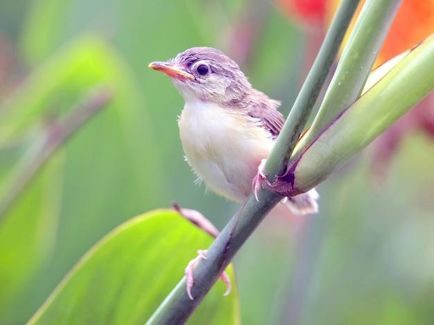 Bouchent la vue du joli petit oiseau