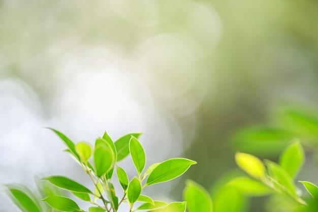 Bouchent la vue de la nature de la feuille verte sur fond flou