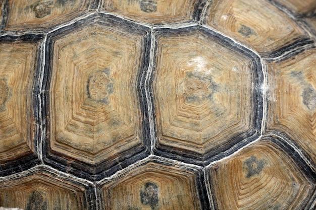 Bouchent la vue sur la texture hexagonale d'une carapace de tortue.