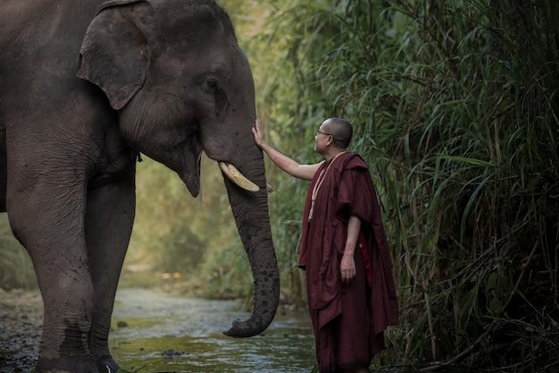 Bouddha compatissant et éléphants thaïlandais