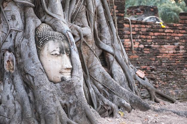 Bouddha dans une racine d'arbre bodhi