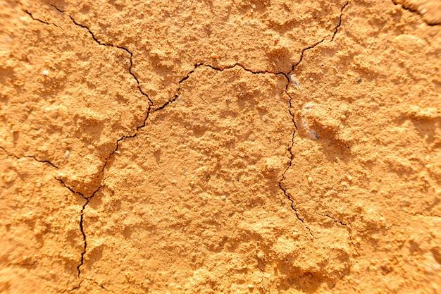 Boue sèche, avec des fissures causées par la sécheresse estivale, en arrière-plan.