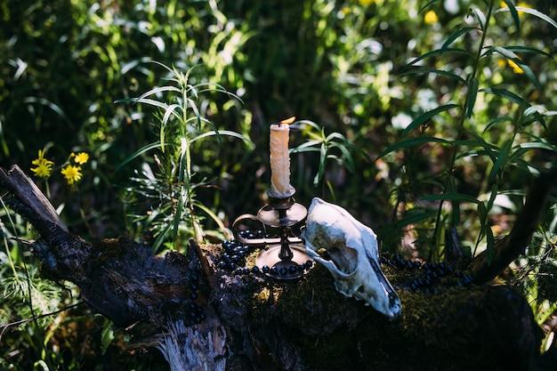 Bougie allumée et vieux crâne dans le concept ésotérique occulte de forêt enchantée