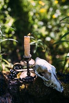 Bougie allumée et vieux crâne dans le concept ésotérique occulte de la forêt enchantée
