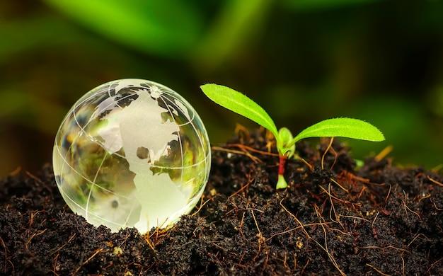 Boule de globe en verre avec la croissance d'arbres et l'arrière-plan flou de la nature verte