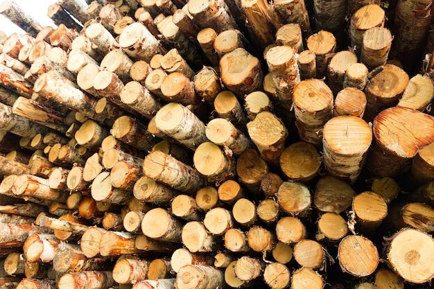 Le bouleau rond est empilé en rangées. la déforestation. photo de haute qualité