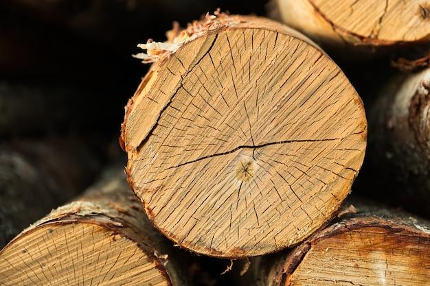 Les bouleaux rondins reposent en tas. tranche de tronc d'arbre. photo de haute qualité