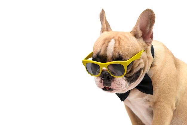 Bouledogue français brun mignon portant des lunettes de soleil