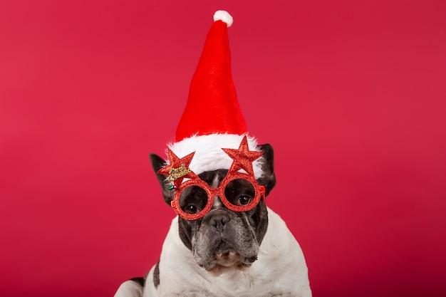 Bouledogue français avec un chapeau de noël et des lunettes de soleil drôles sur rouge