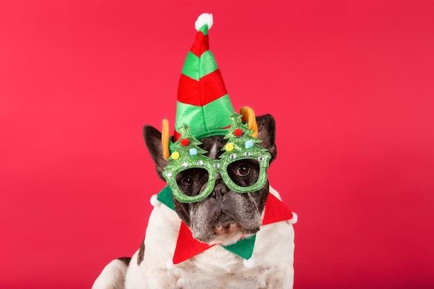 Bouledogue français déguisé en elfe de noël avec des lunettes de noël