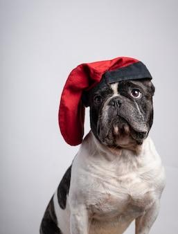 Bouledogue français drôle avec bonnet rouge