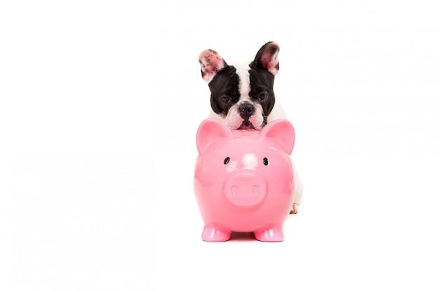 Bouledogue français économiser de l'argent