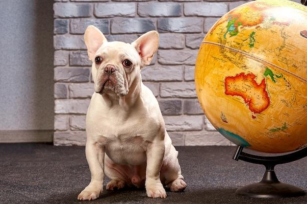 Bouledogue français avec un globe terrestre, voyage avec chien, où aller avec le concept de chien
