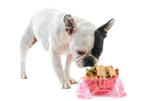 Bouledogue français et nourriture pour animaux de compagnie sur blanc