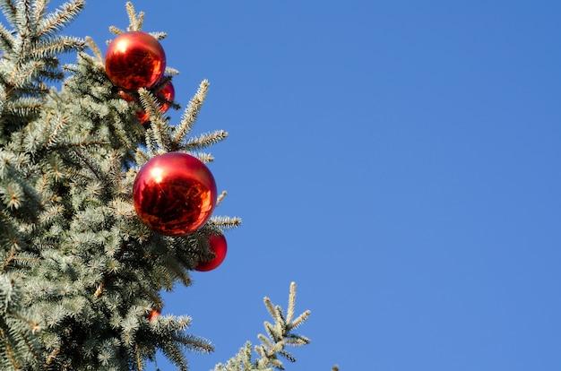 Boules rouges sur un pin avec un fond bleu