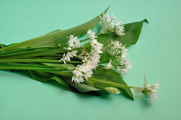 Bouquet d'ail sauvage