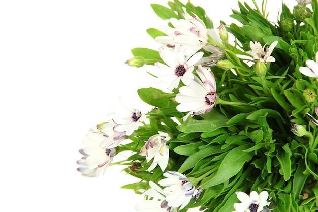 Bouquet de belles fleurs d'été