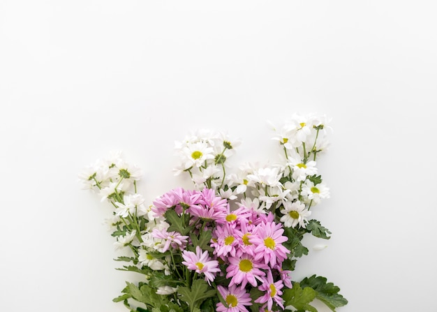 Bouquet de belles fleurs de marguerite sur fond blanc