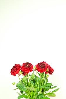 Bouquet de belles fleurs rouges fraîches