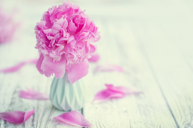 Bouquet de belles pivoines rose pâle dans un vase sur fond de tableau blanc.