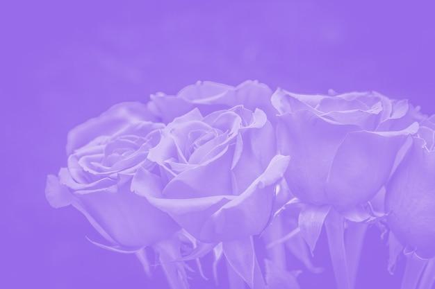 Bouquet de belles roses aux reflets violets. composition florale