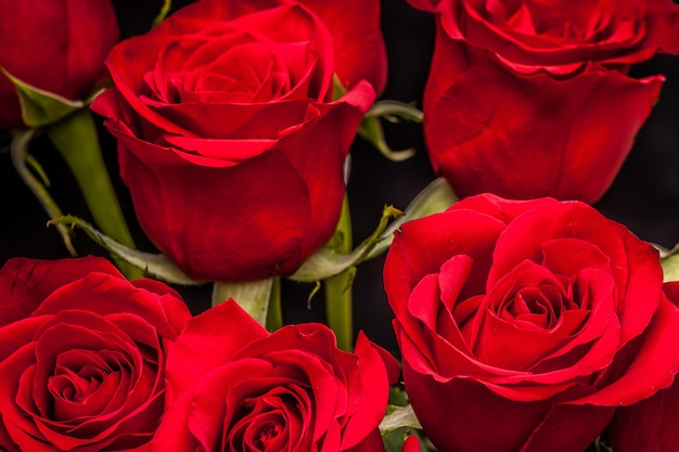 Bouquet de belles roses rouges sur fond noir