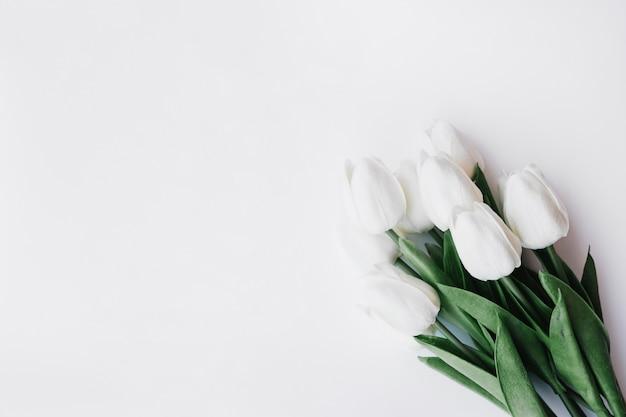 Bouquet de belles tulipes sur fond blanc