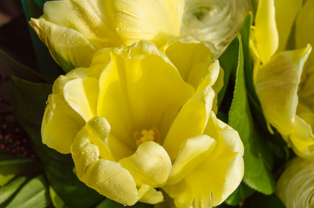 Bouquet de belles tulipes jaunes gros plan, vue de dessus