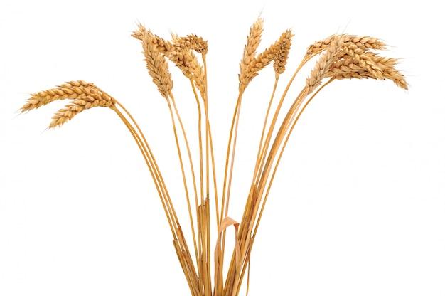 Bouquet de blé isolé