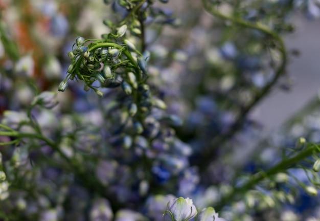 Bouquet bleu de premier agrandi de fleurs de printemps