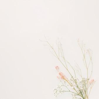 Bouquet de branches de plantes minces sèches