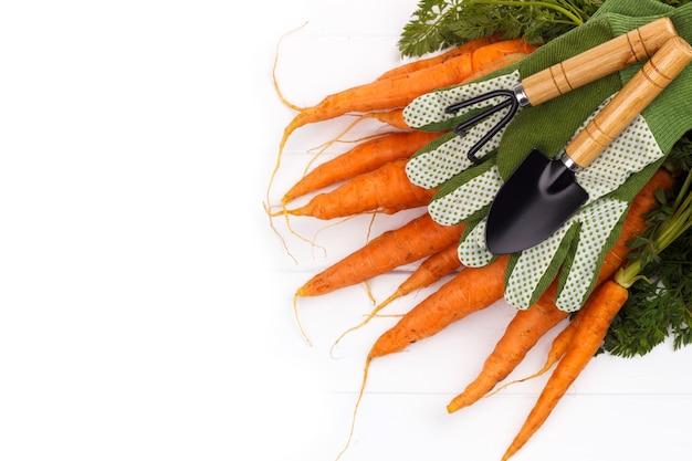 Bouquet de carottes fraîchement récoltées