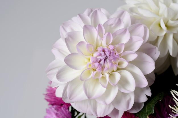 Un bouquet de chrysanthèmes de couleurs vives. fond floral d'automne